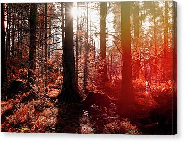 Autumnal Afternoon Canvas Print