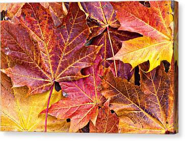 Autumnal Carpet Canvas Print by Meirion Matthias