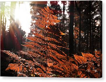 Autumnal Evening Canvas Print