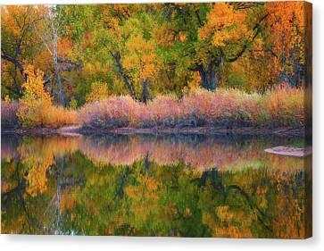 Autumn's Color Palette  Canvas Print by Darren White