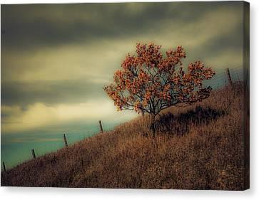 Autumns End Canvas Print