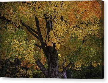 Autumns Glory Canvas Print by Garry Gay