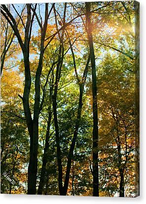 Autumns Glory Canvas Print