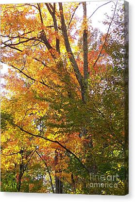 Canvas Print featuring the photograph Autumn's Gold - Photograph by Jackie Mueller-Jones