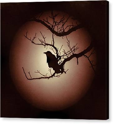 Autumn's Light Black Crow Silhouette Canvas Print by Terry DeLuco