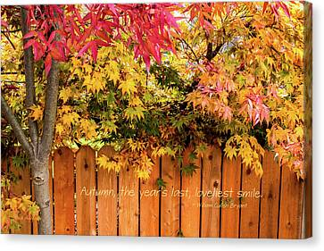 Autumn's Smile Canvas Print by Mick Anderson