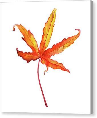 Painted Details Canvas Print - Autumt Maple Leaf by Ekaterina Efanova