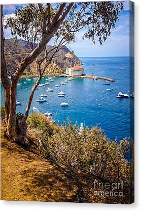 Port Town Canvas Print - Avalon Bay Catalina Island Picture by Paul Velgos