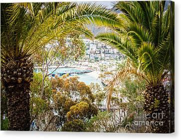 Avalon California Through Palm Trees Canvas Print by Paul Velgos