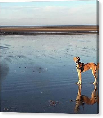 Ava's Last Walk On Brancaster Beach Canvas Print by John Edwards