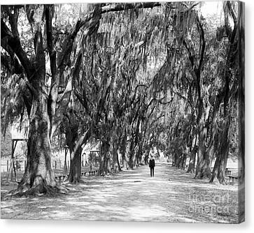 Avenue Of Live Oaks, New Orleans Ca 1910  Canvas Print by Jon Neidert