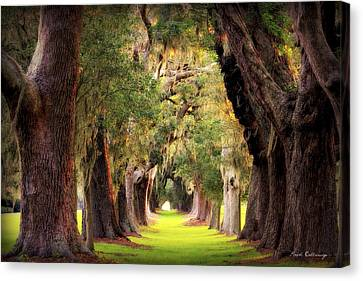 Oak Canvas Print - Avenue Of Oaks Sea Island Golf Club St Simons Island Georgia Art by Reid Callaway