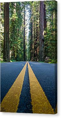Avenue Of The Giants Canvas Print by Alpha Wanderlust