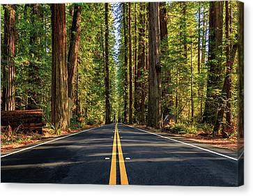 Canvas Print featuring the photograph Avenue Of The Giants by James Eddy