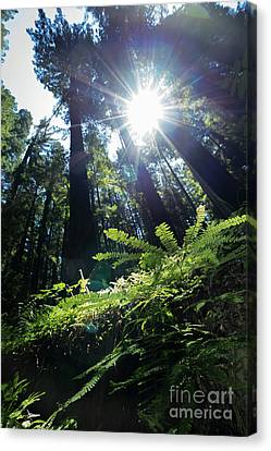 Canvas Print featuring the photograph Avenue Of The Giants Redwood Trees California Dsc5517 by Wingsdomain Art and Photography