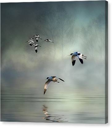 Avocet Dawn Canvas Print by Brian Tarr