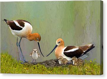 Avocet Family Canvas Print by Thanh Thuy Nguyen