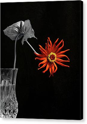 Awaken Canvas Print by Don Spenner