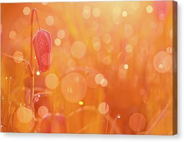 Snakes Head Fritillary Canvas Print - Awakening In A Wonder World - Snake's Head/ Chess Flower  by Roeselien Raimond