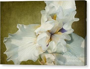 Awakening Canvas Print by Beve Brown-Clark Photography