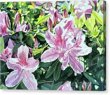 Canvas Print - Azalea Carmelo by David Lloyd Glover