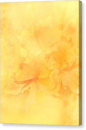 Azalea Impressions Canvas Print by Catherine Alfidi