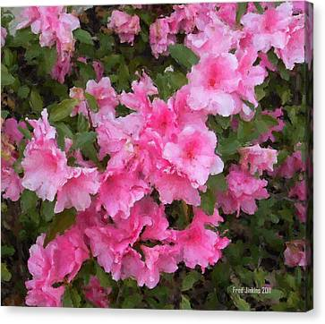 Azalea Watercolor  Canvas Print by Fred Jinkins