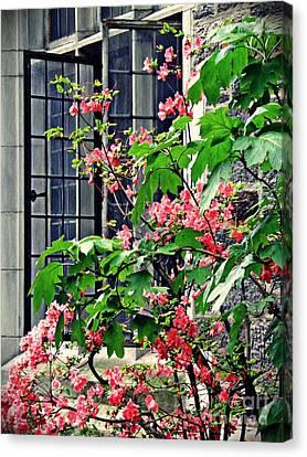 Azaleas At The Window   Canvas Print by Sarah Loft