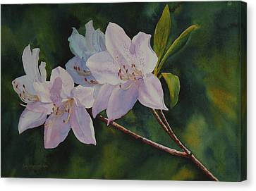 Canvas Print featuring the painting Azaleas by Judy Mercer