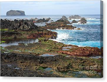 Azores Seascape Canvas Print by Gaspar Avila