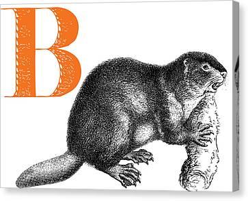 B Beaver Canvas Print by Thomas Paul