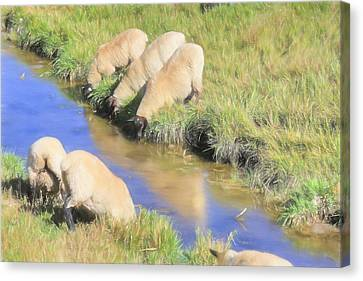 Baaaaack To The Watering Hole Canvas Print by Donna Kennedy