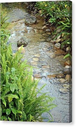 Canvas Print featuring the photograph Babble Brook by Amanda Eberly-Kudamik