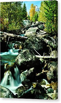 Babbling Brook Canvas Print by Greg Norrell