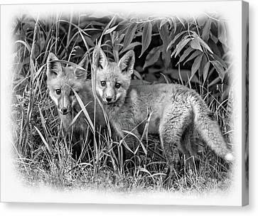 Fox Kit Canvas Print - Babes In The Woods - Vignette Bw by Steve Harrington