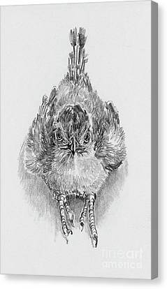 Roadrunner Canvas Print - Babies Of The Bosque Baby Roadrunner by Pat Oldham