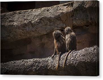 Baboon Brothers Canvas Print