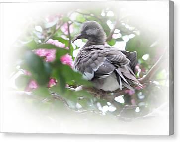 Baby Bird In Crape Myrtle Tree Canvas Print by Linda Phelps