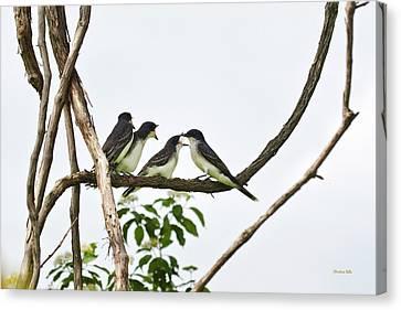 Baby Birds - Eastern Kingbird Family Canvas Print by Christina Rollo