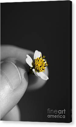 Baby Bloom Canvas Print by Jorgo Photography - Wall Art Gallery