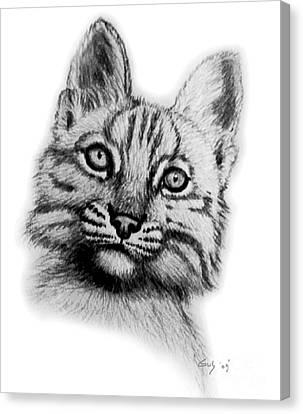 Bobcat Kittens Canvas Print - Baby Bobcat by Nick Gustafson