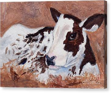 Baby Cow Aceo Canvas Print by Brenda Thour