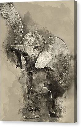 Baby Elephant 1- By Diana Van Canvas Print