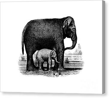 Baby Elephant T-shirt Canvas Print by Edward Fielding