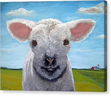 Baby Farm Lamb Sheep  Canvas Print by Linda Apple