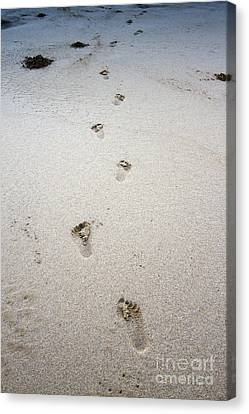 Baby Footprints In The Sand Canvas Print by Dustin K Ryan