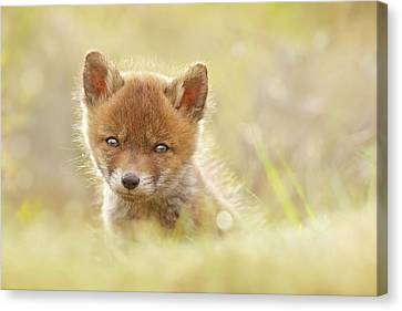 Baby Fox Canvas Print by Roeselien Raimond