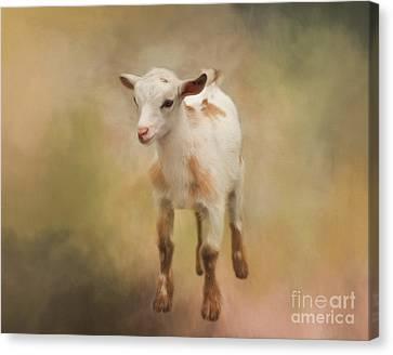 Kathy Rinker Canvas Print - Baby by Kathleen Rinker