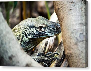 Canvas Print featuring the photograph Baby Komodo Dragon by Scott Lyons