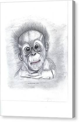Baby Orangutan Canvas Print by Don  Gallacher